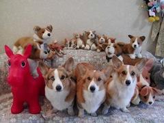 Комнатные собаки