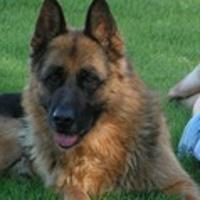 Породы собак: большие и маленькие, охранные и домашние