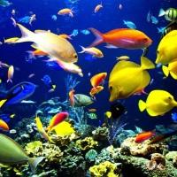 Крутые рыбки для аквариума: красивые и неприхотливые