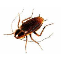 Добавляем отраву для тараканов в обойный клей