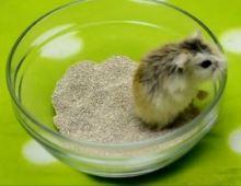 Песочная ванна для хомяка
