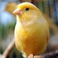 Какую птицу завести в качестве домашнего животного?